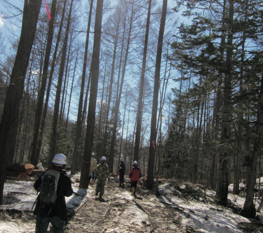 自宅に使う構造材の伐採現場を見学している様子