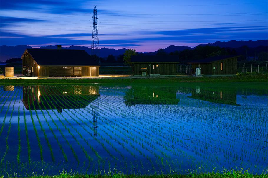 写真:夕方の様子